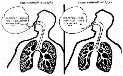 Вдыхаемый и выдыхаемый человеком воздух