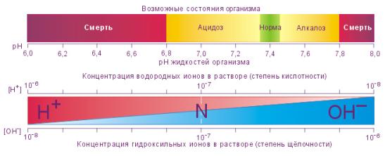 pH-среда. Возможные состояния организма